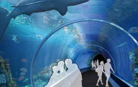 STL Aquarium