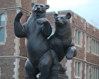 The bears outside Washington University's Athletic Complex