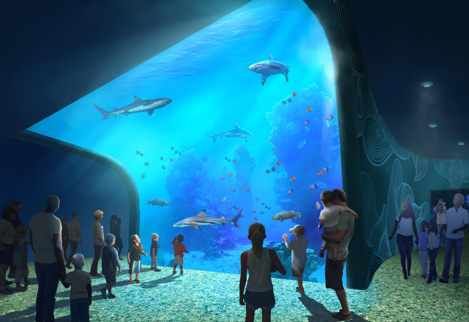 The St. Louis Aquarium is working on several exhibits, one of which is the Shark Canyon, which will include over 30 sharks and rays.